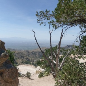 mt-lemmon-with-tree