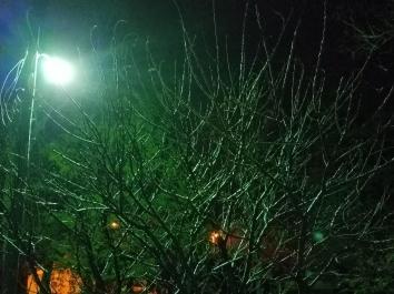 trees-ronda-del-boccio